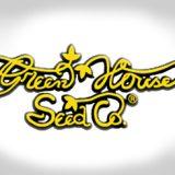 Green house Seeds Femminizzata 1 seme