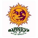 Barney's Farm autofiorenti femminizzati 3 semi