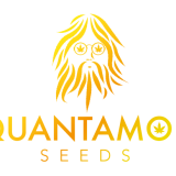Quantamon Seeds Femminizzata 1 Seme