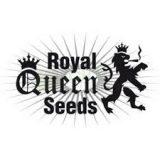 Royal Queen Femminizzati 3 semi
