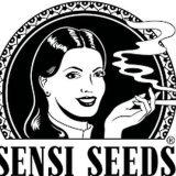 Sensi Seeds Autofiorenti Femminizzati 3 semi