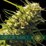 CRITICAL IMPACT 10 semi femm Vision Seeds