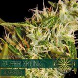 SUPER SKUNK AUTO 3 semi Vision Seeds