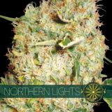 NORTHERN LIGHTS 3 semi femm Vision Seeds