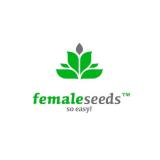 Female Seeds Femminizzata 4 semi